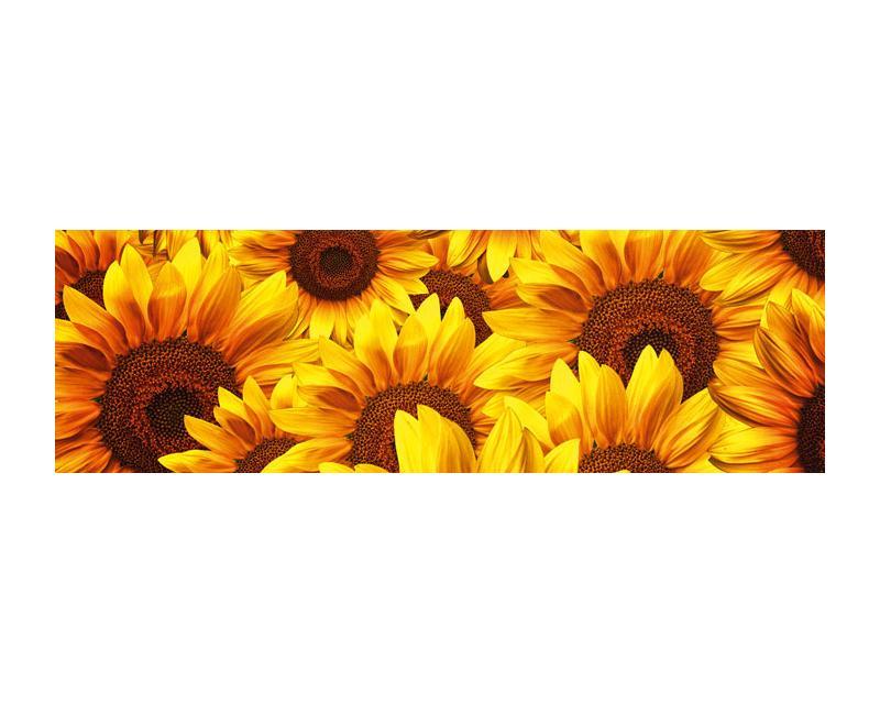 K chenr ckwand glas sonnenblumen dimex - Fototapete kuchenruckwand ...